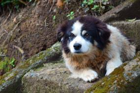 Mountain Pup in Monte Verde, Costa Rica